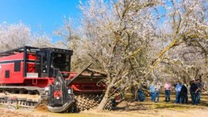 orchard clearing
